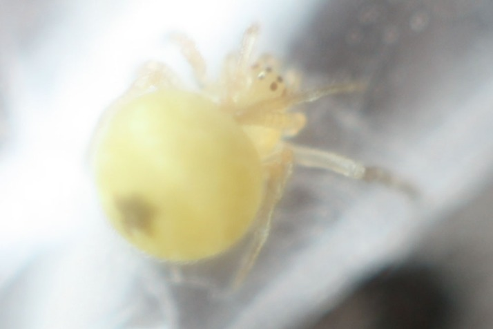 Spinne 2