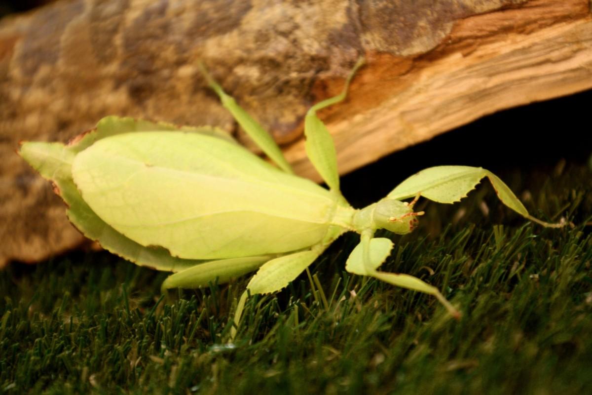 Lebende Blätter