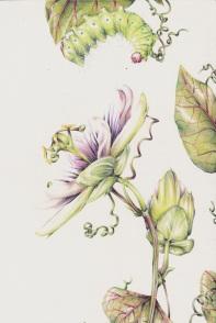Raupe und Passionsblume
