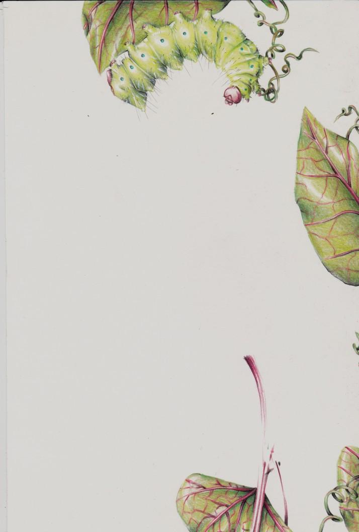 Raupe und Passionsblume - Entwicklungsprozess 6
