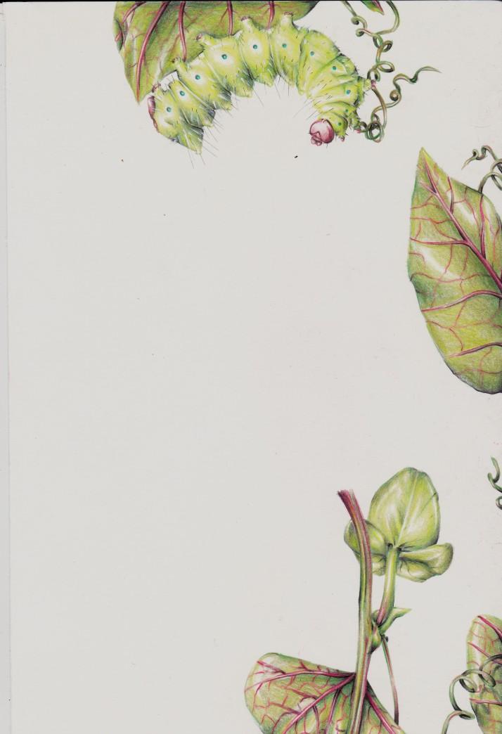 Raupe und Passionsblume - Entwicklungsprozess 7