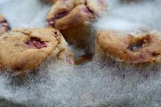 Schimmel Muffins