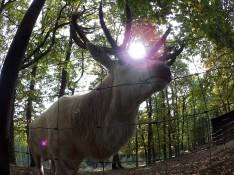 Hirsch mit Sonne