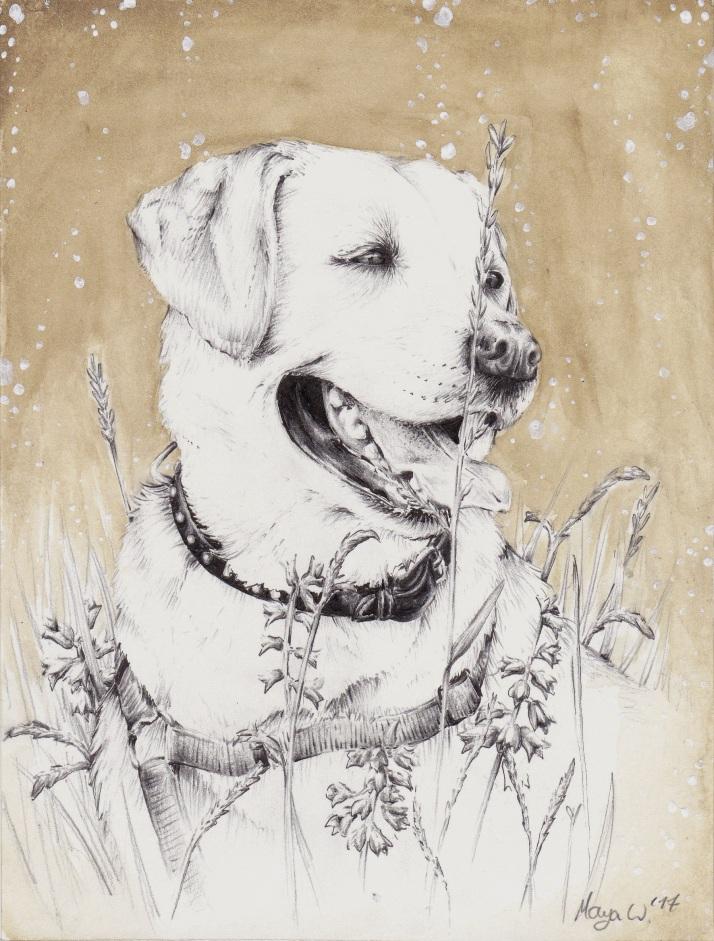 Hund in Schwarz Weiß Braun.jpg