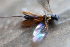 Insekt 1