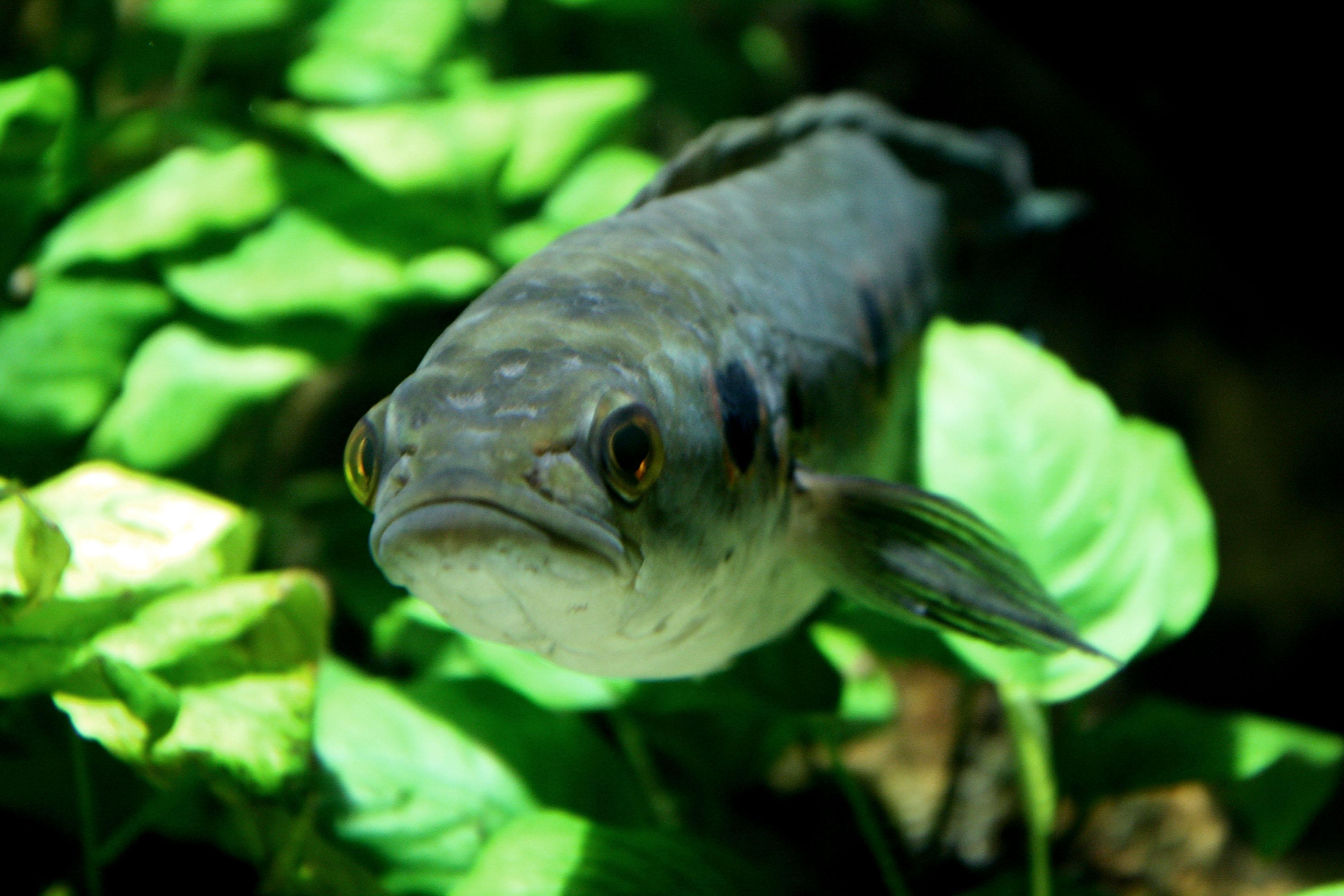 Wütender Fisch