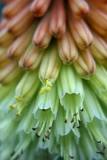 Blüten 02