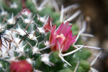 Kaktus 02
