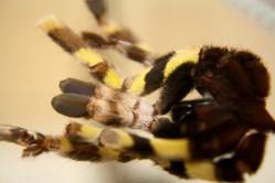 Namenlose Spinne 01