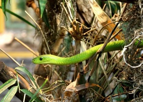 Grüne Schlange 1