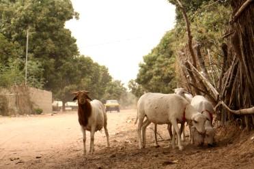 Senegal 2018 (215)