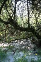 Unterbachersee 09
