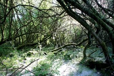 Unterbachersee 13