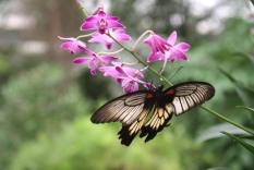 Orchideenhaus Lemmer 01