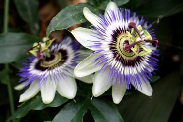 Orchideenhaus Lemmer 09
