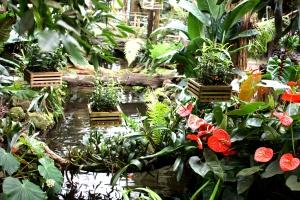 Orchideenhaus Lemmer 13