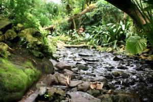 Orchideenhaus Lemmer 16