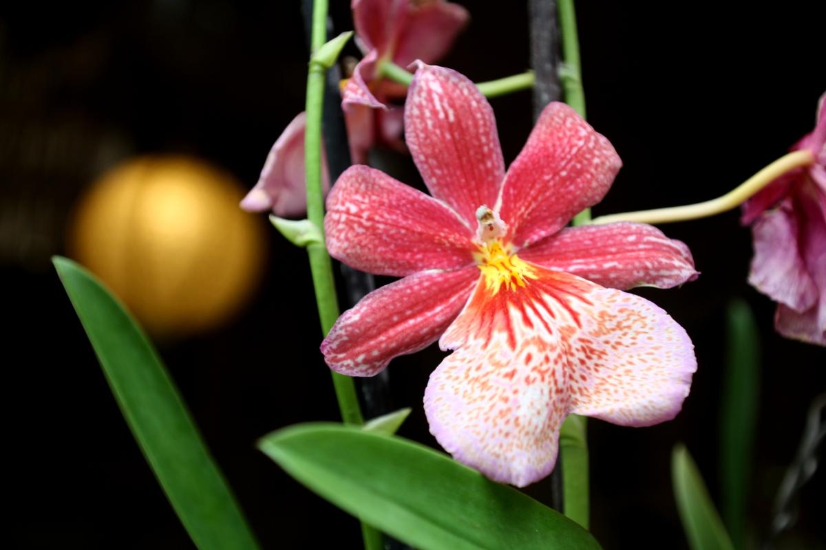 Orchideenhaus Lemmer