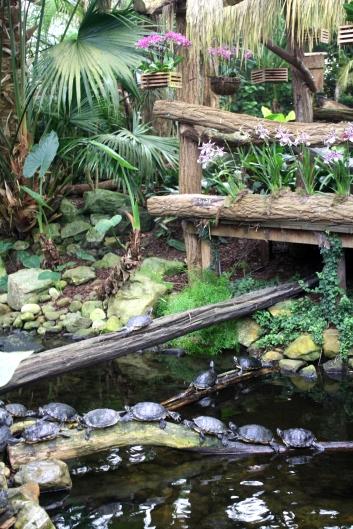 Orchideenhaus Lemmer 21