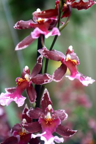 Orchideenhaus Lemmer 22